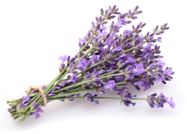 Lavendel-trocknen-Kopie-2